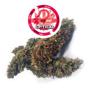 Critical Kush® CBD 15%