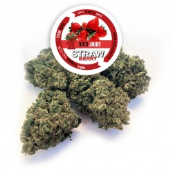 Strawberry® CBD 20%